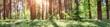 Leinwandbild Motiv pine and fir forest panorama