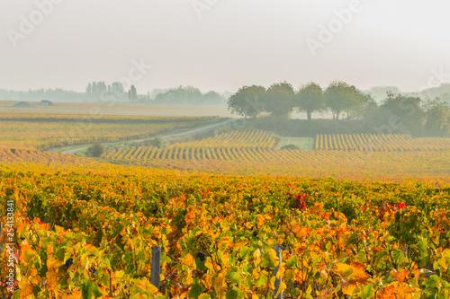 Tuinposter Wijngaard Pastoral vineyard scene in fall in the Burgundy region of France
