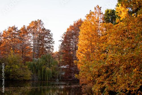Foto op Canvas Bomen Herbstlandschaft