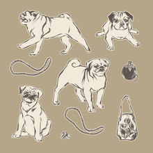 Pugs And Vintage Fashion Accessories. Hand Drawn Vector Sketch Pets Set.