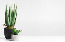 Aloe Vera And Mini Succulent Plant In Pots Over Light Wall