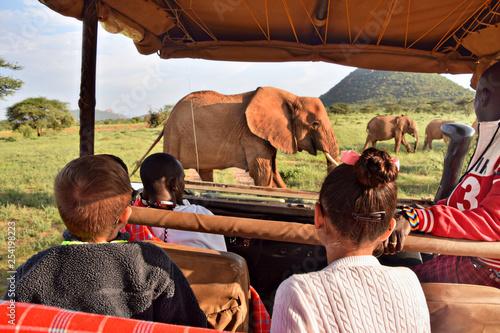 safari Fototapeta