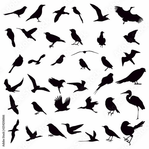 Fotografía  Vector Collection of Bird Silhouettes
