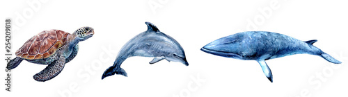 Fotografie, Obraz  Watercolor hand drawn sea turtle, dolphin, minke whale realistic illustration isolated on white