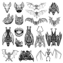 Large Set Of Bats And Vampires. Human Lips With Fangs, Skeleton, Bat Skull And Aggressive Face Or Head. Open Wings Flying Gothic Monsters. Ink Line Engraving Sketch In Black. Vector.