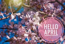 Banner Hello April. Hi Spring....