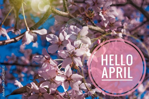 Photo Banner hello april