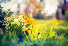 Beautiful Spring Summer Garden Closeup, Flowers And Sunlight With Blurred Background