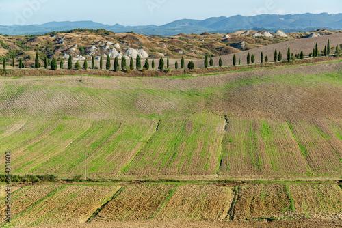 Fotografia  Die Landschaft der Crete Senesi besteht aus den vier Gemeinden Asciano, Buonconv