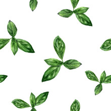 Watercolor Hand Drawn Basil Herb Isolated Seamless Pattern.
