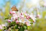 Fototapeta Natura - Frühling 447