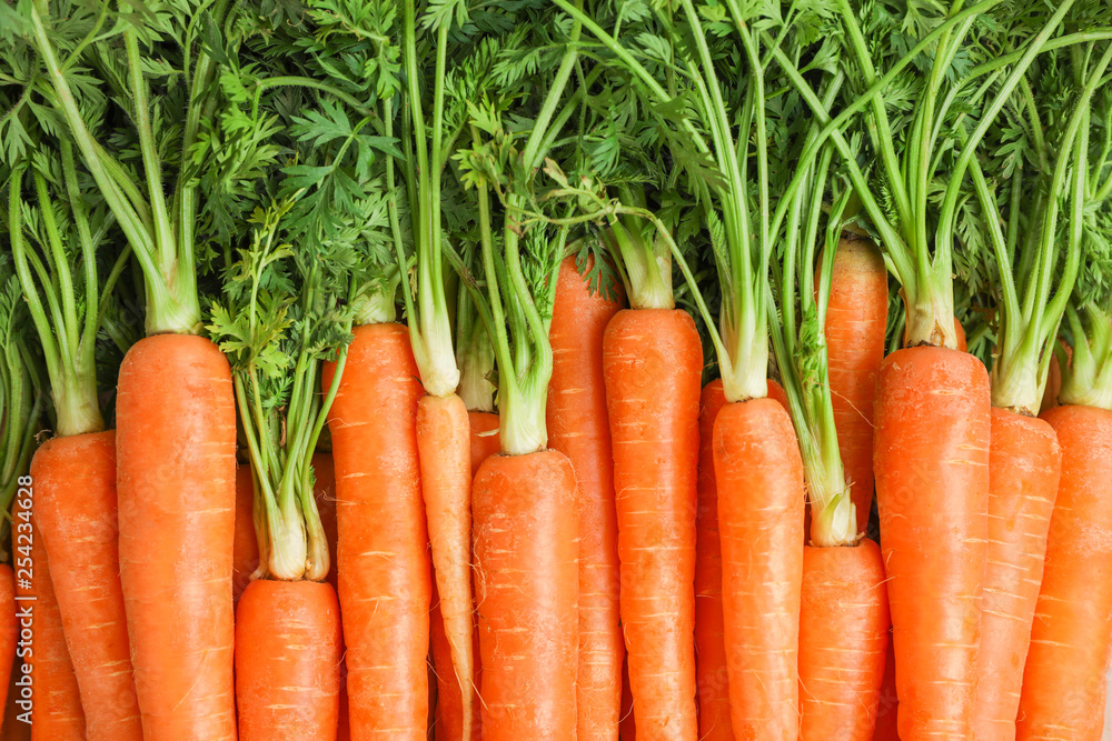 Fototapety, obrazy: Ripe fresh carrots as background, space for text