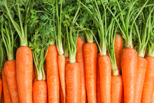 Ripe Fresh Carrots As Backgrou...