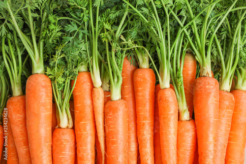 Photo  Ripe fresh carrots as background, space for text