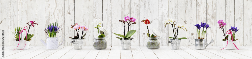 Fototapety, obrazy: flowers in pots set isolated on white wood background, web banner with copy space for florist shop concept