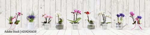 flowers in pots set isolated on white wood background, web banner with copy space for florist shop concept