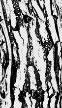Wood Texture Pine Bark On Transparent Background