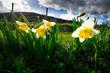 ein Hauch von Frühling im Kaiserstuhl