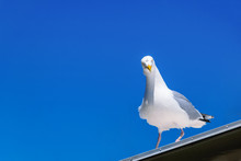 Seagull Sees You All Through