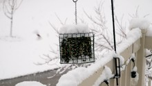 A Flock Of House Finches At A Backyard Feeder During A Snow Storm Scatter - Slow Motion