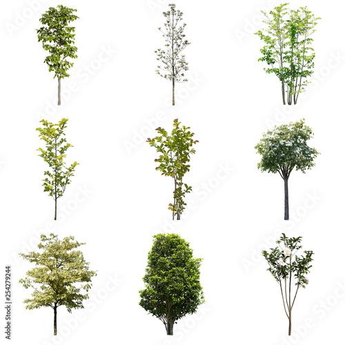 Cadres-photo bureau Oliviers ガーデニング庭木切り抜き素材