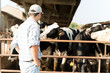 canvas print picture - Breeder in front of his cows