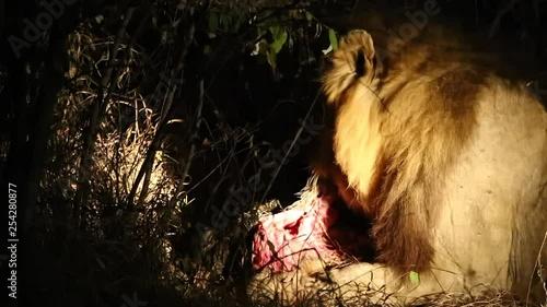 что, зачастую саванна львы охота видео деньгах дело было