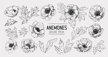 Sketch Of Anemone Flowers. Han...
