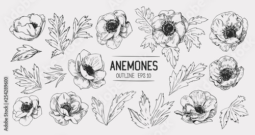 Sketch of anemone flowers Wallpaper Mural