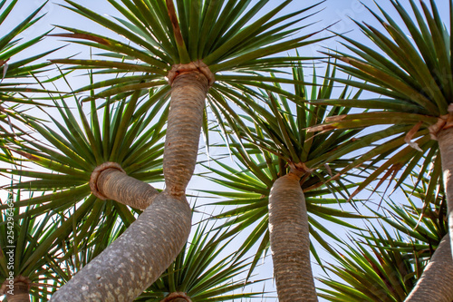 Fotografiet  blue sky over me with palms