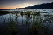 Evening Mood At The Lake Quinault Near Quinault, Olympic Peninsula, Washington, USA, North America