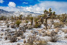 Desert Snow Landscape Near Red...
