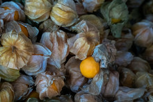 Heap Of Cape Gooseberry (Physalis Peruviana) Also Known As Golden Berry, Inca Berry, Pichu Berry, Physalis, Calyx Open Showing Fruit Inside, Closeup And Selective Focus.