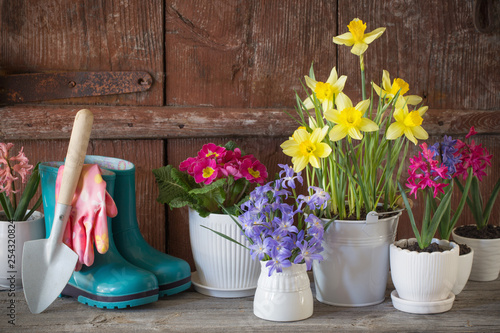 Foto op Plexiglas Europa Gardening tools and spring flowers on wooden background