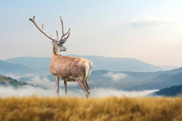 Fototapeta Współczesny Deer on mountain background
