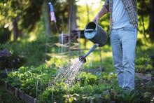 Man Farmer Watering A Vegetable Garden