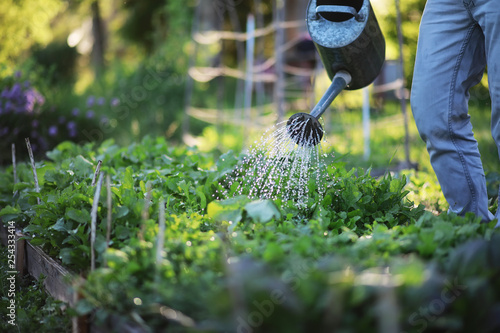 Man farmer watering a vegetable garden Fototapeta