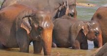 Beutiful Wildlife Scene Of Sma...
