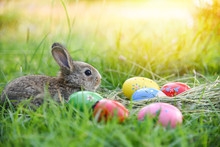 Easter Bunny And Easter Eggs On Green Grass Outdoors