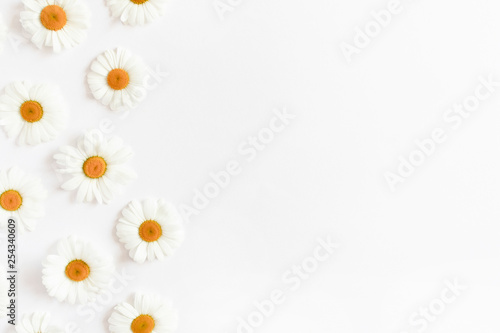 Tuinposter Madeliefjes White chamomile flowers