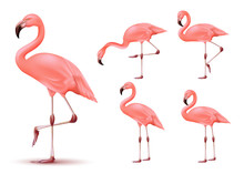 Flamingo 3D Realistic Vector Mesh Set Tropical Animal With Different Poses In Isolated White Background. Vector Illustration