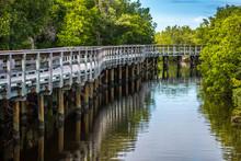 A Mangrove Tunnel In Brandeton, Florida