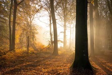 Las Crécy jesienią