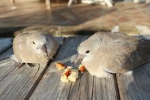 Turtle Dove Couple On Bench Wood Garden