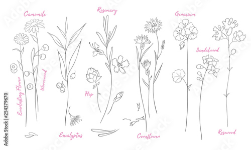 Fototapeta Wildflowers one line drawings set. obraz