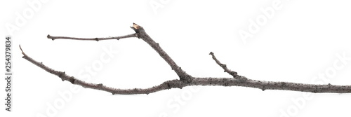 Valokuva  Dry twig, branch isolated on white background