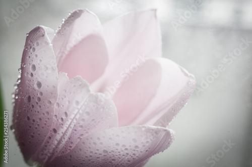 Garden Poster Spa beautiful flowers in gentle tones. macro.