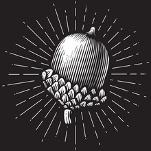 Acorn- Vintage Engraved Vector Illustration (hand Drawn Style)