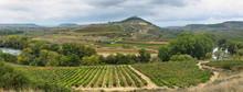 Vineyards And Davalillo Castle, La Rioja (Spain)