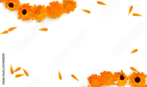 Fotografía  Frame of flowers and petal Calendula ( Calendula officinalis, pot marigold, ruddles ) on a white background with space for text